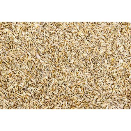 JETZT NEU --Rico´s Gras -Samen Mix 250g   BL1628