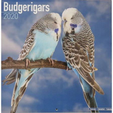 Kalender Wellensittiche 2020