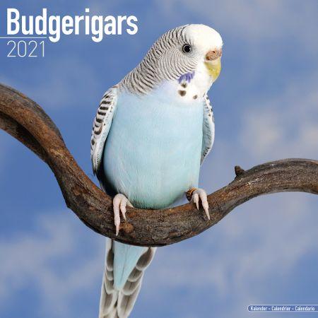 Kalender Wellensittiche 2021