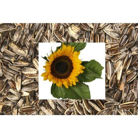 Sonnenblumen gestreift extra groß 450g   01031