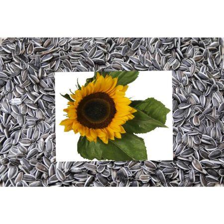 Sonnenblumen gestreift  500g    01030